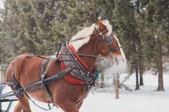 52-winter-wedding-sleigh-ride-wisconsin