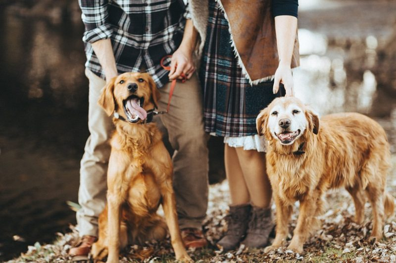 Wisconsin Wedding & Portrait Photographer Couples with Dogs Film-Style Images